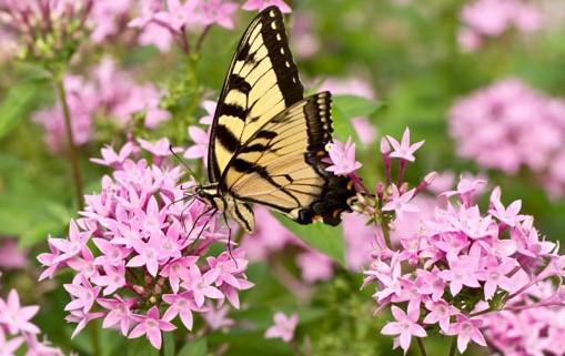 Sotto un'altra luce. Vedere i fiori con gli occhi di una farfalla